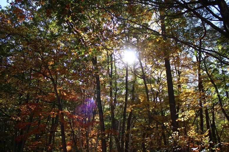 紅葉を見られる幸せ_f0227395_19361125.jpg