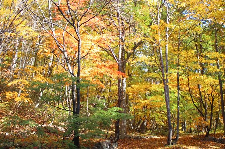 紅葉を見られる幸せ_f0227395_19362320.jpg