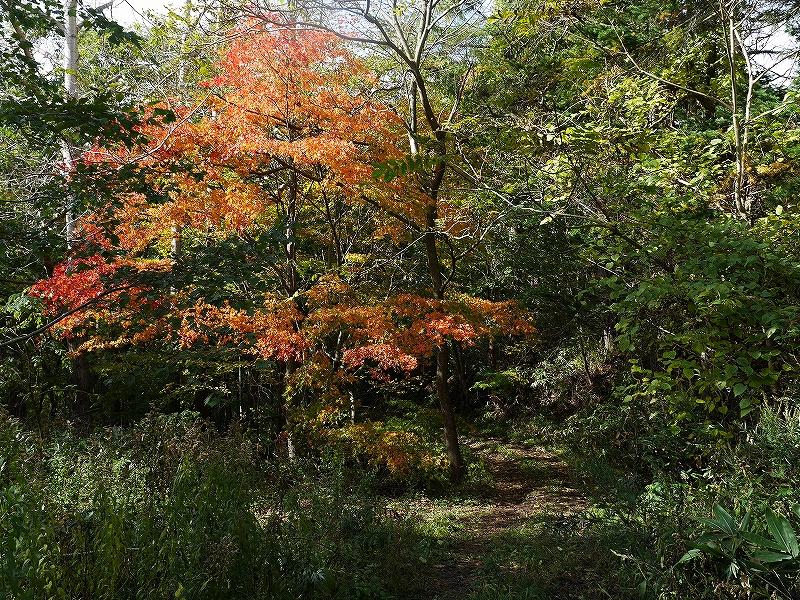 10月28日、稀府岳(まれっぷだけ)と伊達紋別岳_f0138096_2240285.jpg