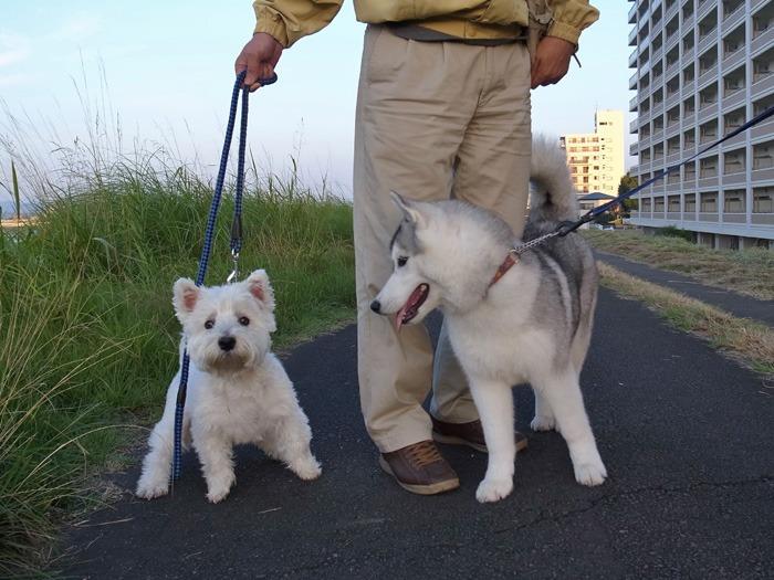 たのしいお散歩_c0049299_16123740.jpg