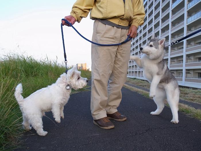 たのしいお散歩_c0049299_16134021.jpg