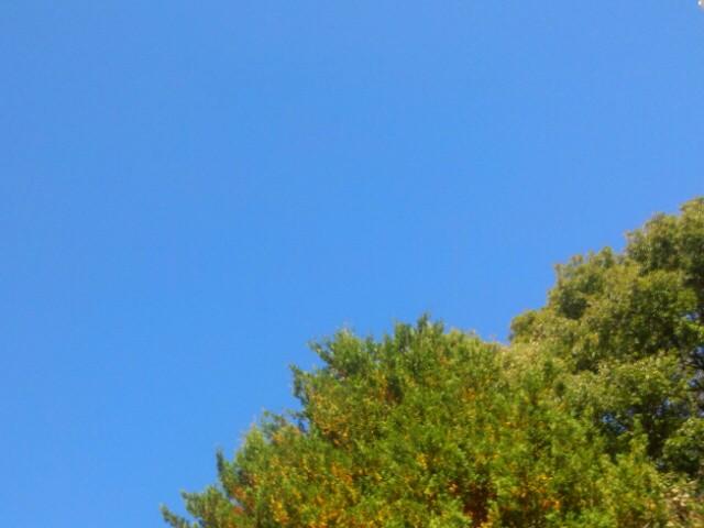 秋晴れ月曜日♪_c0140599_11392462.jpg