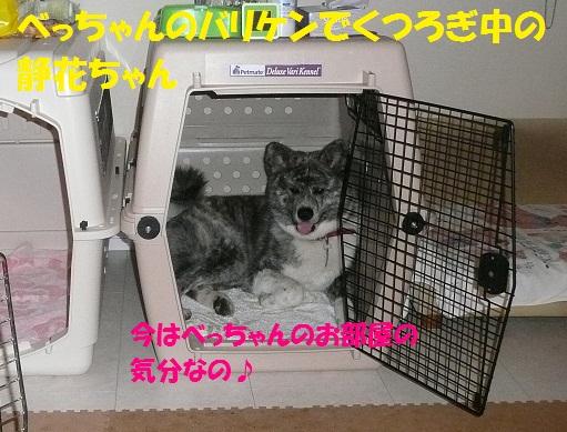 f0121712_10504473.jpg