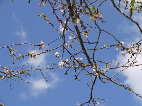 茨城県フラワーパーク。_b0116313_22485496.jpg