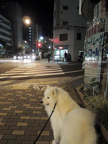 早朝散歩_c0062832_814392.jpg