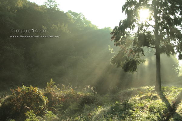 秋のソウル**_b0197639_11463978.jpg