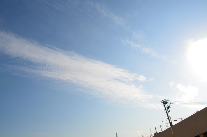 """""""色づき始めるヤマボウシとハナミズキそして、秋の空雲""""_d0153941_16282495.jpg"""