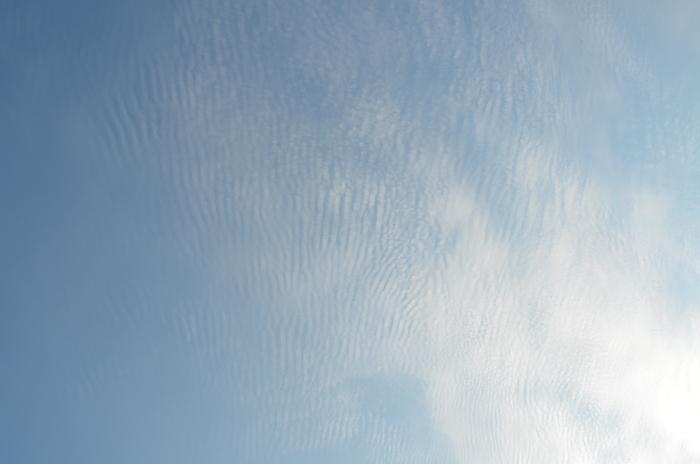 """""""色づき始めるヤマボウシとハナミズキそして、秋の空雲""""_d0153941_16404725.jpg"""
