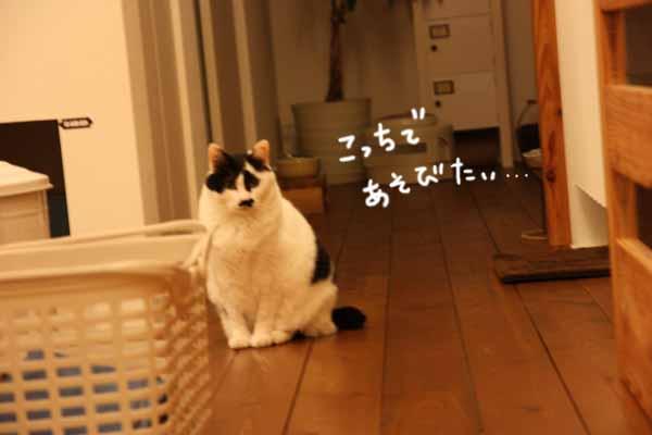 b0223446_9355889.jpg