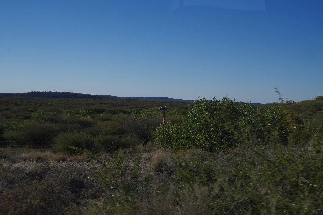 ナミビアの旅(36) カオコランドからエトーシャへ_c0011649_032349.jpg