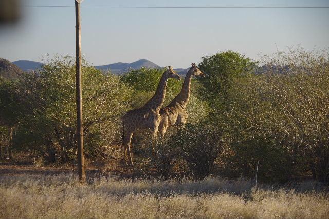 ナミビアの旅(36) カオコランドからエトーシャへ_c0011649_0382536.jpg
