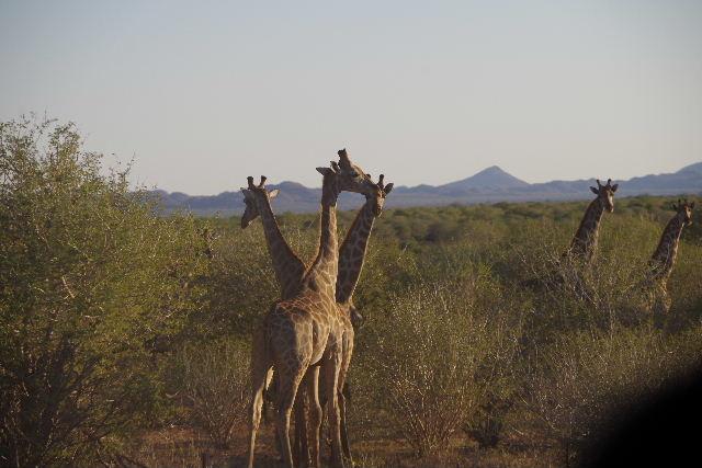 ナミビアの旅(36) カオコランドからエトーシャへ_c0011649_0384126.jpg