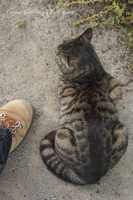 猫のいる風景 靴と猫背_b0133053_1474431.jpg