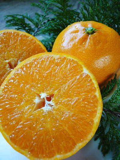 究極の柑橘「せとか」 いよいよ色付いてきました!でも、もう1回り大きくなりますよ!!_a0254656_17473763.jpg