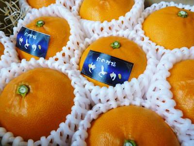 究極の柑橘「せとか」 いよいよ色付いてきました!でも、もう1回り大きくなりますよ!!_a0254656_18565.jpg