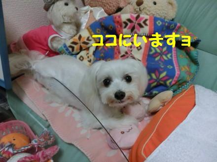b0193480_1282258.jpg