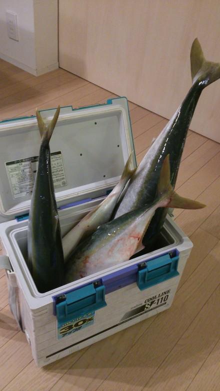 出世魚の呼び方_f0172281_10522929.jpg