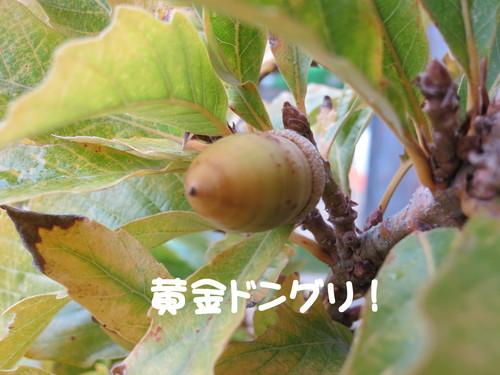 b0200291_20172146.jpg