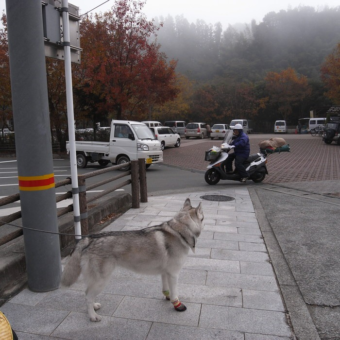 Memory of the second pilgrimage with husky HANA_c0049299_16585164.jpg