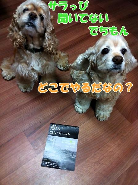 b0067012_0394368.jpg