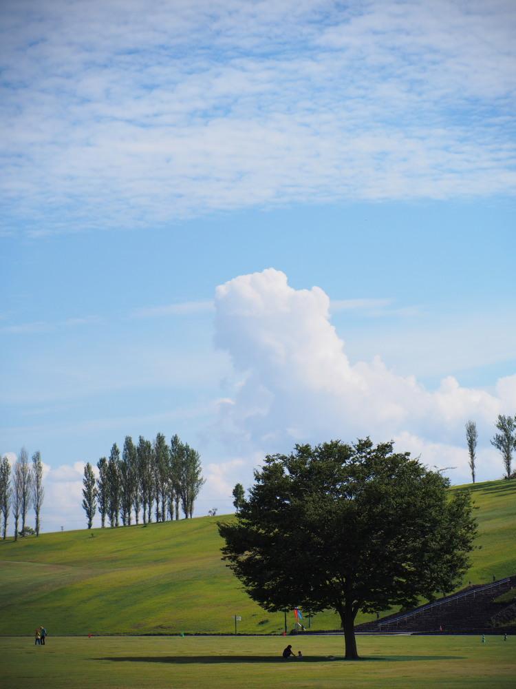 丘と雲と木_e0169421_2063713.jpg