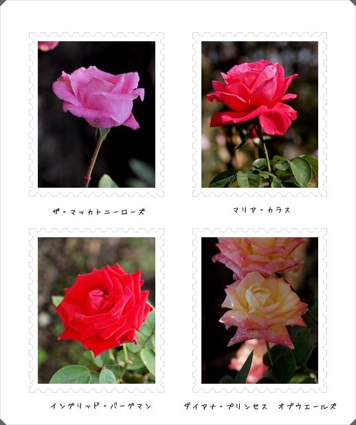 バラは薔薇_c0026824_16201019.jpg