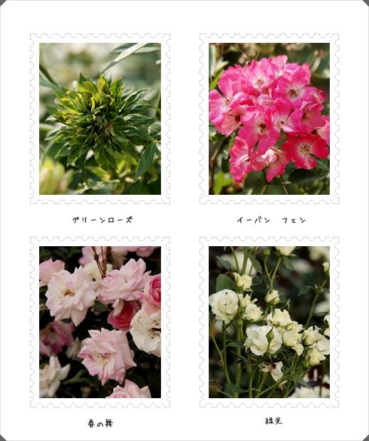 バラは薔薇_c0026824_1657138.jpg