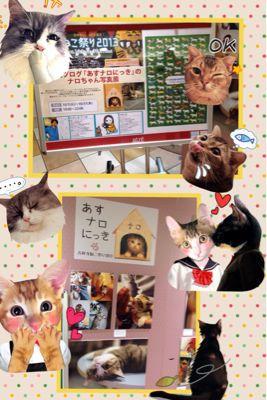 シフォンレッスン(上級・最上級30回目)『米粉抹茶』_b0203925_18105621.jpg
