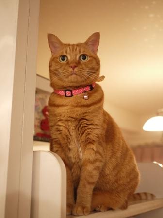 素直になれない茶トラ女の子猫 しぇる編。_a0143140_19422586.jpg