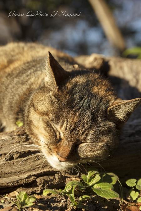 猫のいる風景 爆睡寝顔_b0133053_04413.jpg