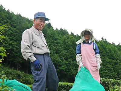 菊池水源茶 秋冬茶の茶摘_a0254656_1717598.jpg