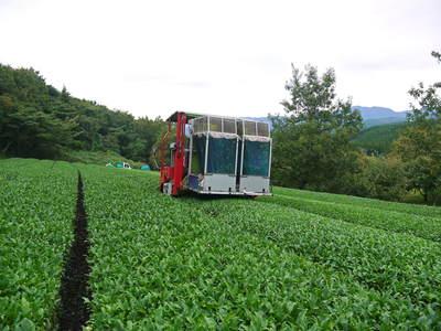 菊池水源茶 秋冬茶の茶摘_a0254656_17454730.jpg