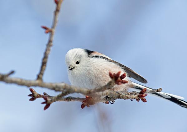 ついに明日から開催:写真展「北の野鳥 四羽展」_b0165760_23385412.jpg