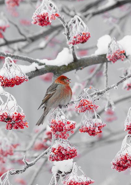 ついに明日から開催:写真展「北の野鳥 四羽展」_b0165760_23394226.jpg