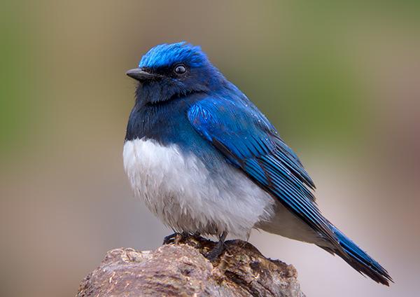 ついに明日から開催:写真展「北の野鳥 四羽展」_b0165760_2340294.jpg