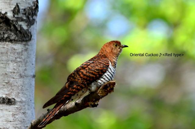 ついに明日から開催:写真展「北の野鳥 四羽展」_b0165760_2344102.jpg