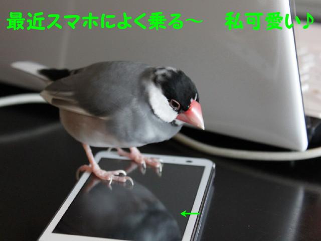 b0158061_2313069.jpg