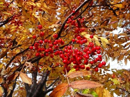 紅葉が綺麗でした_a0220570_21332341.jpg