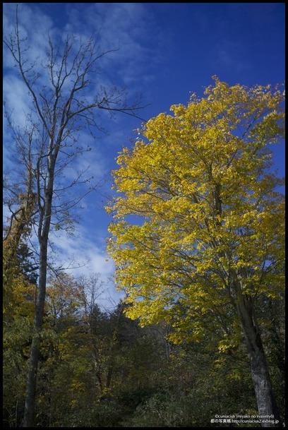 さわやかな黄葉—当別、道民の森_f0042194_0375952.jpg