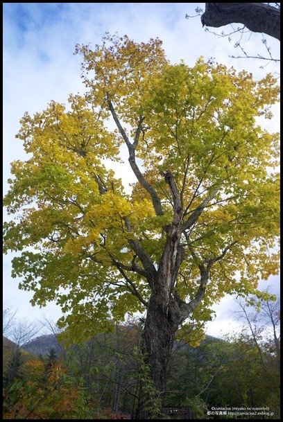 さわやかな黄葉—当別、道民の森_f0042194_0381445.jpg