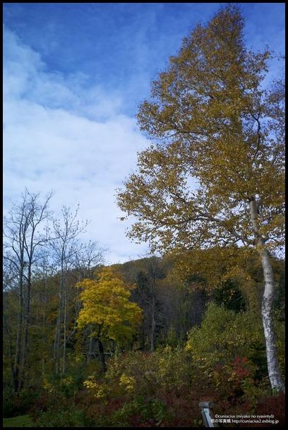 さわやかな黄葉—当別、道民の森_f0042194_038165.jpg