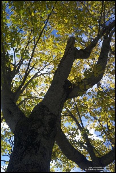 さわやかな黄葉—当別、道民の森_f0042194_038411.jpg