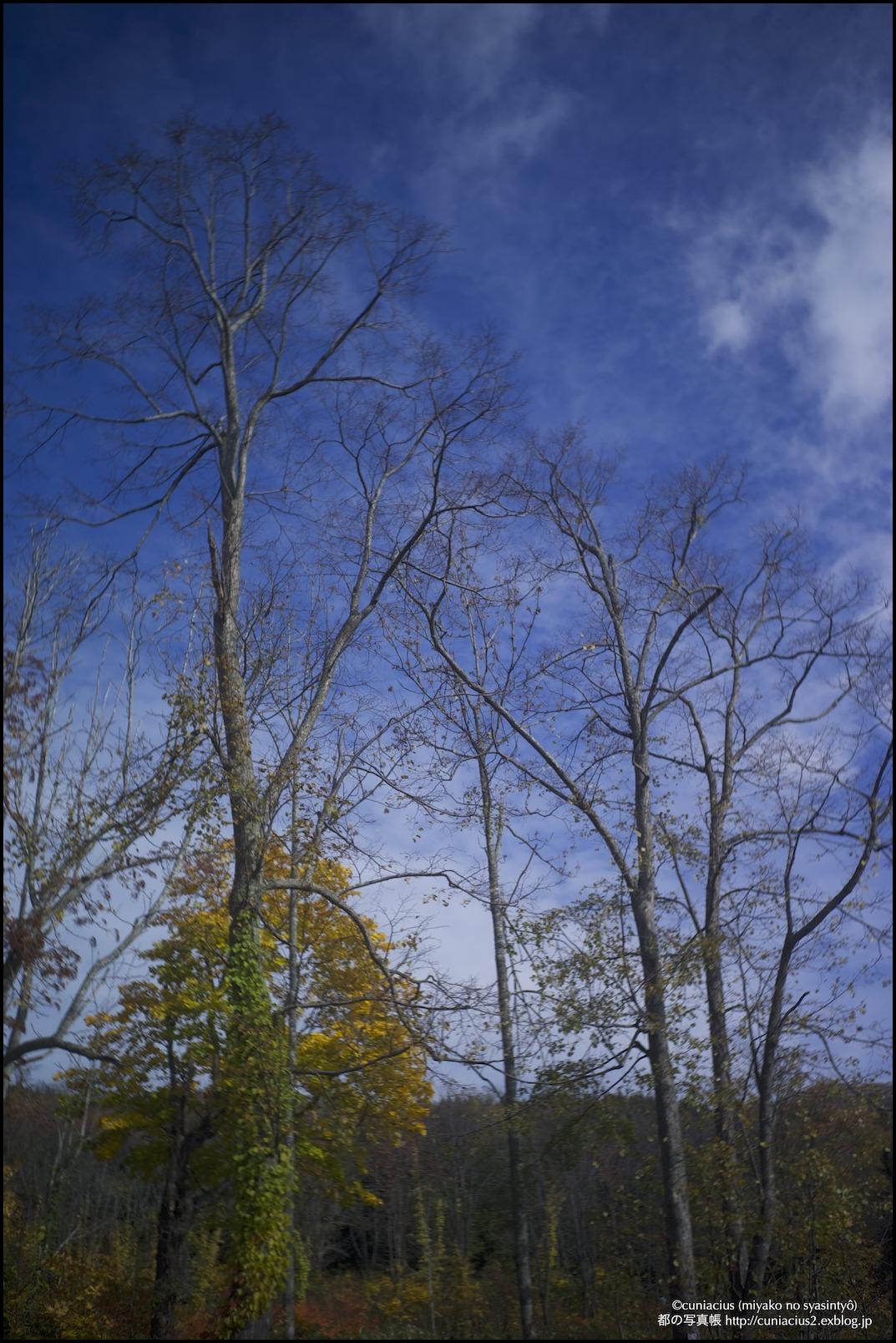 さわやかな黄葉—当別、道民の森_f0042194_038824.jpg
