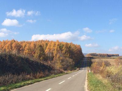 秋晴れです(o^^o)_f0096216_13155785.jpg