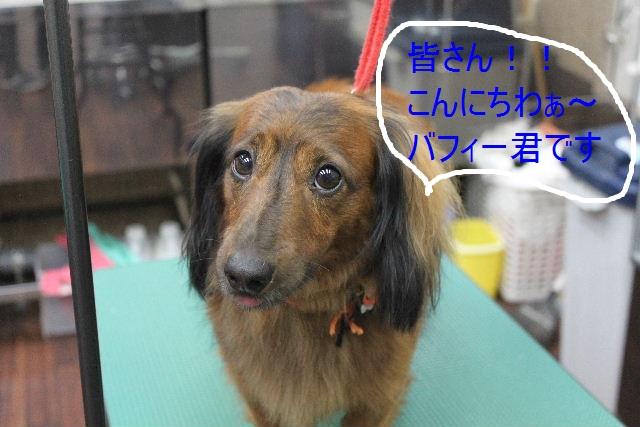 本日11月1日で、犬濯屋 川村は「5周年」を迎えました!!_b0130018_2010271.jpg