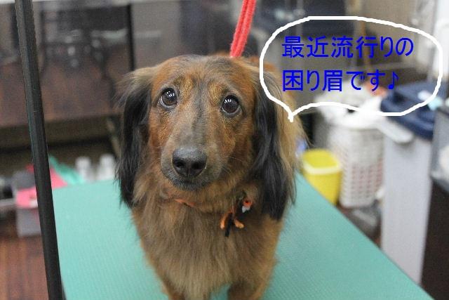 本日11月1日で、犬濯屋 川村は「5周年」を迎えました!!_b0130018_20111570.jpg
