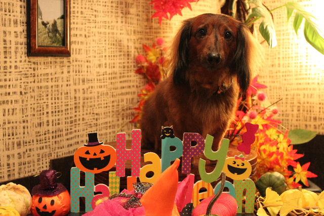 本日11月1日で、犬濯屋 川村は「5周年」を迎えました!!_b0130018_20112569.jpg