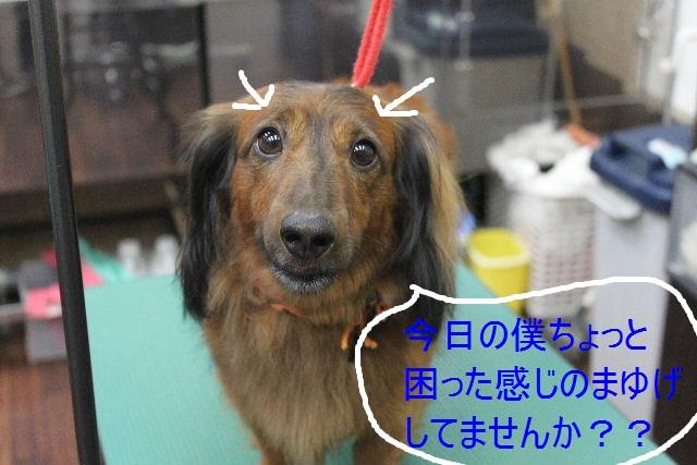 本日11月1日で、犬濯屋 川村は「5周年」を迎えました!!_b0130018_2011832.jpg