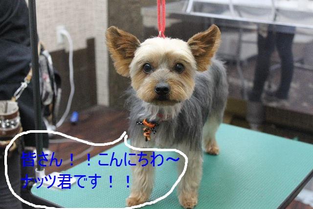 本日11月1日で、犬濯屋 川村は「5周年」を迎えました!!_b0130018_20124068.jpg
