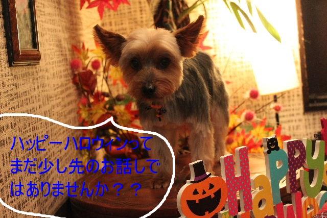 本日11月1日で、犬濯屋 川村は「5周年」を迎えました!!_b0130018_20124660.jpg